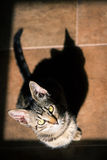 One With the Shadow. A tabby European Shorthair kitten and his shadow in the light from a window Stock Photography