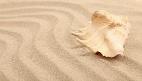 One shell is located on sandy background Royalty Free Stock Images