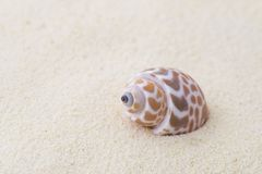 Shell on white sand Stock Images