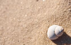 One shell on a sand. Summer beach background template with an empty text space Stock Image