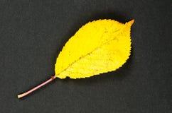 One shiny yellow leaf Imágenes de archivo libres de regalías