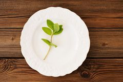 One shoot of fresh wild mint on white plate on wooden background Stock Images