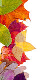 One side frame from pied autumn leaves Royalty Free Stock Photos