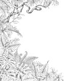 One Sided  Background with Tropical  Plants. Hand drawn branches and leaves of tropical plants. One sided tropic  background with space for text. Monstera, fern Royalty Free Stock Photography