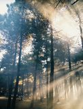 One-sided Sunrays Through Woods royalty free stock photo