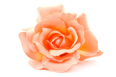 One silk orange rose Royalty Free Stock Photography