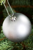 One silver christmas ball handing on a tree. Royalty Free Stock Image