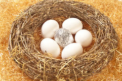 One silver foil egg with five white eggs Stock Images