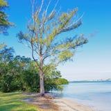 Simply Tree Royalty Free Stock Photo