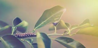 One single caterpillar Stock Image