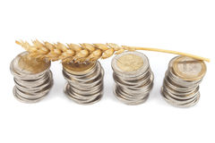 One single corn stalk lies on Euro coins Royalty Free Stock Photo