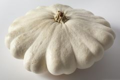 One single Patison,  patty pan squash Royalty Free Stock Image