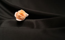 One single rose Royalty Free Stock Images