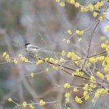 One small bird marsh tit. Sit in the tree stock photos
