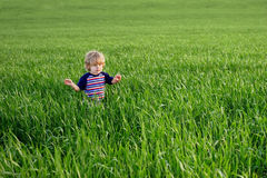 One small child in an ocean of grass Stock Images