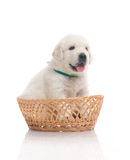 One small cute dog puppy Stock Photos