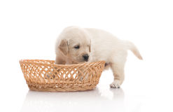 One small cute dog puppy Royalty Free Stock Photography