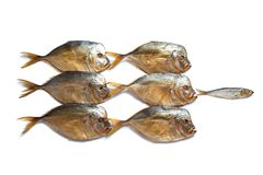 One small fish against a big fishes. Smoked big fish Vomero and one small fish isolated on  white background Stock Photo