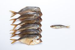 One small fish against a big fishes. Smoked big fish Vomero and one small fish  on  white background Royalty Free Stock Photo