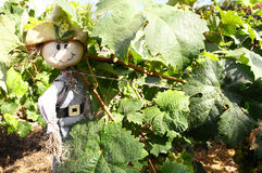 One Small Funny Scarecrow. On a Green Vineyard Stock Photos