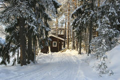 One small house in a coniferous forest. Outhouse in woodland, Virrat, Finland Royalty Free Stock Image