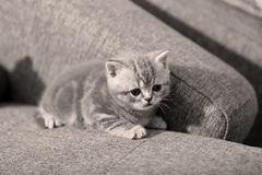One small kitten Royalty Free Stock Photos