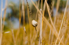 One small snail holding on plant stem. Nature background Royalty Free Stock Images