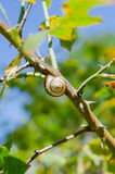 One small snail holding on a plant stem. Nature background Stock Image