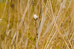 One small snail holding on plant stem. Nature drought background Royalty Free Stock Photos