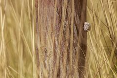 One small white snail on tree Royalty Free Stock Image