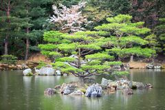 One of 10 smaller islands of the Mirror Pond Kyoko-chi lake is in a magnificent Japanese strolling garden. Kyoto, Japan. Rainy d Royalty Free Stock Photography