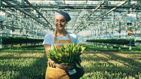 One smiling woman carrying a bucket with tulips in a greenhouse. 4K stock footage