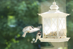 One sparrow eating and another flying to the bird feeder. Stock Photos