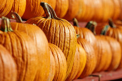 One, Special Pumpkin Always Stands Out Stock Images
