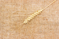 One spikelet of wheat on a sackcloth Stock Photos