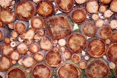 One Square Log. Stack of logs piled in a cord with one square log in the middle of round ones Stock Images