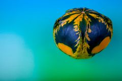 One squash on a colored background. Royalty Free Stock Photos
