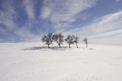 And only one stand alone. A group of trees in winter. But one stand alone and looked to the other one Stock Images