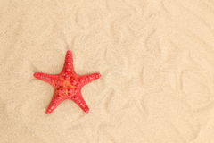 One starfish is located on sandy background Stock Photos