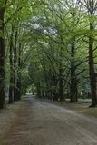One of the stately driveways with tall trees at Soestdijk Palace, Netherlands.  stock image