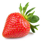 One strawberry royalty free stock photography