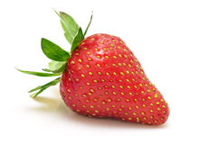 One Strawberry Stock Photo