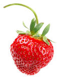 One strawberry Stock Photography