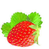 One strawberry with leaf isolated on white background. Isolated strawberry on white background as package design element stock image