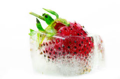 One strawberry ripe in the ice. Royalty Free Stock Images