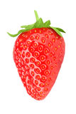One strawberry on a white background isolated Royalty Free Stock Photography