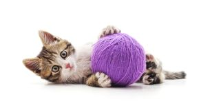 One striped kitten with a ball of yarn. On a white background royalty free stock photo