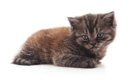 One striped kitten. On a white background royalty free stock image