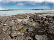 Stuffed lava on island Islote Tintoreras commemorates the moonland, Galapagos, Ecuador royalty free stock photos