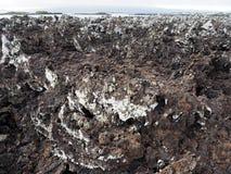 Stuffed lava on island Islote Tintoreras commemorates the moonland, Galapagos, Ecuador. One Stuffed lava on island Islote Tintoreras commemorates the moonland royalty free stock photography